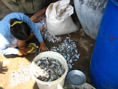 prepping fish